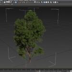Laubwerk Plants Kit 1 & 2 & 3 for Cinema 4D / 3dsMax